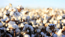 The BCI-certified cotton sourced by fashion brands in 2018 was equivalent to 1.5 billion pairs of jeans